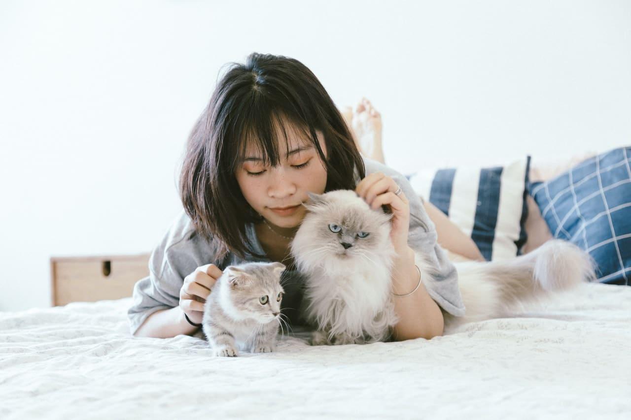 Comment séduire une femme passionnée de chats ?